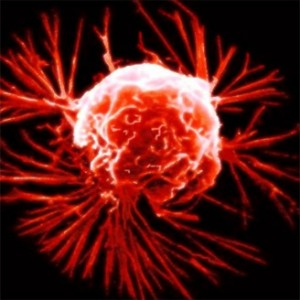cancer-cells_15